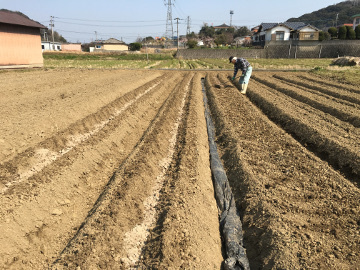 じゃが芋植え馬渡り残りの3畝6