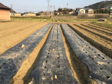 じゃが芋植え馬渡り残りの3畝7