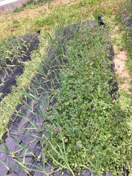 モグラ被害と草取りが11