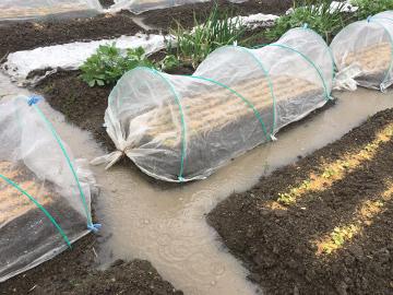 雨の農園3