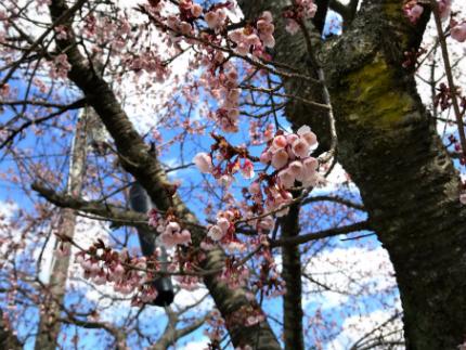 「復興エイサーいわき」鎮魂、そして復興への願い 3月11・12日奉納 [平成29年3月10日(金)更新]tags[福島県]