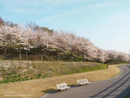 21世紀の森公園の桜 [平成29年4月16日(日)開催]1