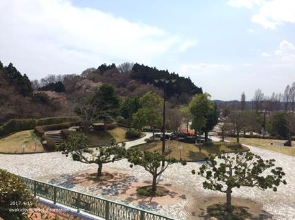 県立いわき公園の桜 [平成29年4月15日(土)開催]1