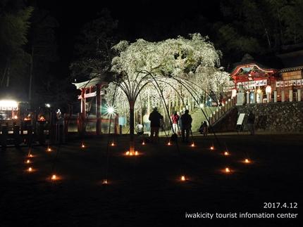 小川諏訪神社のシダレザクラ ライトアップ![平成29年4月12日(水)更新]2