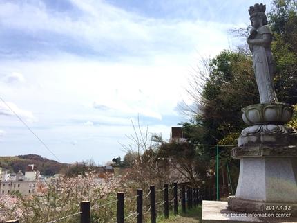 御幸山公園・観音山公園のソメイヨシノ [平成29年4月12日(水)更新]2-2