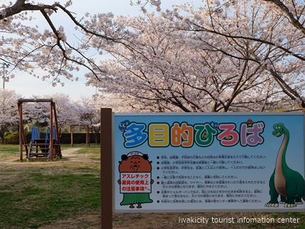 《桜開花状況》久之浜地区の桜 [平成29年4月18日(火)更新]9