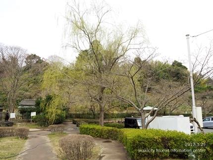 0328松ヶ岡公園3
