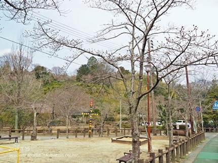 0328松ヶ岡公園10