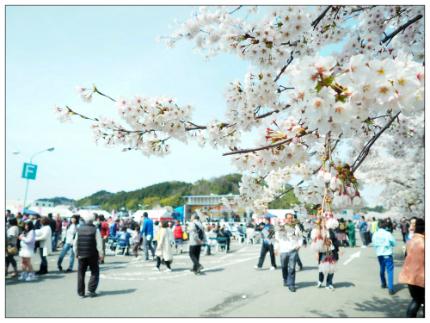 満開笑顔・復興桜 第8回かしまふれ愛さくら祭り-2