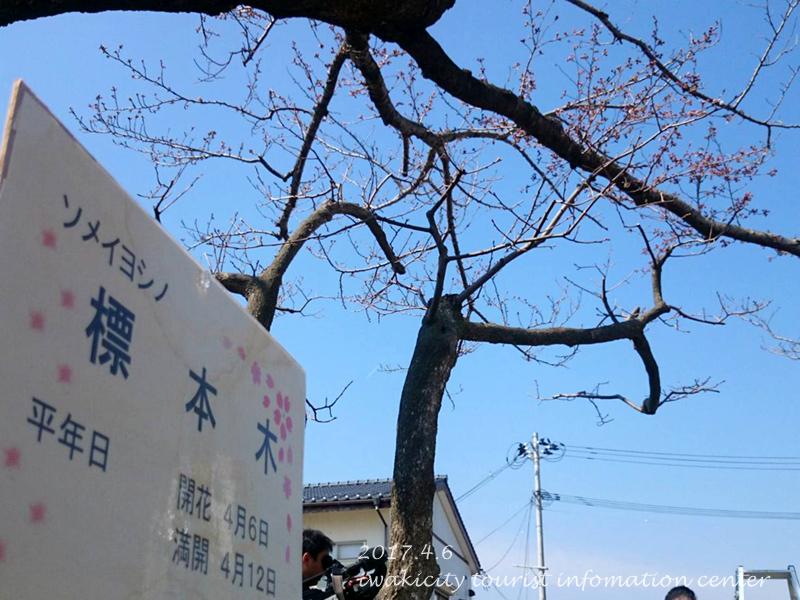 開花宣言[平成29年4月6日(木)更新]4