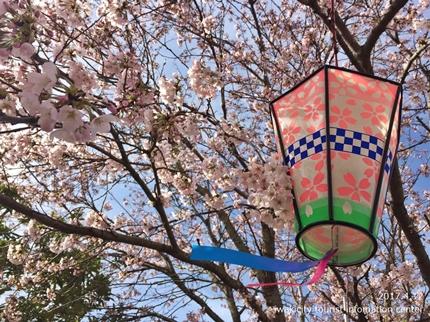 《いわき市桜開花情報》鹿島千本桜 [平成29年4月12日(水)更新]3