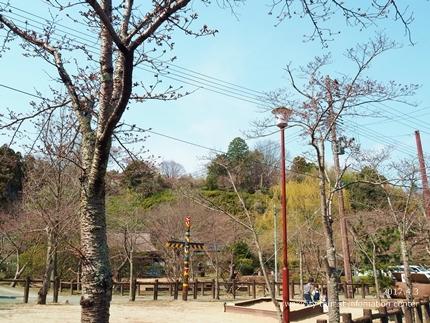 松ヶ岡公園のソメイヨシノ [平成29年4月3日(月)更新]4