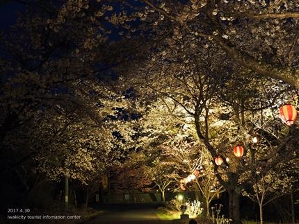 いわきの里鬼ヶ城「桜ライトアップ」レポート [平成29年4月30日(日)更新]3