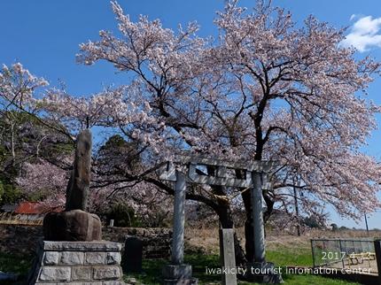 立鉾鹿島神社[平成29年4月13日(木)更新]1