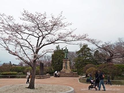 松ヶ岡公園のソメイヨシノ [平成29年4月8日(土)更新]9