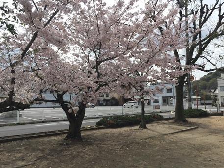 Sakura-01.jpg