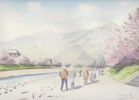 Kawazu-Sakura.jpg