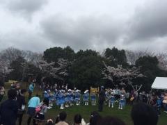 2017の桜4藤原山