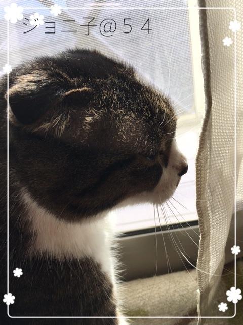 窓際のジョニ子さん2017-2