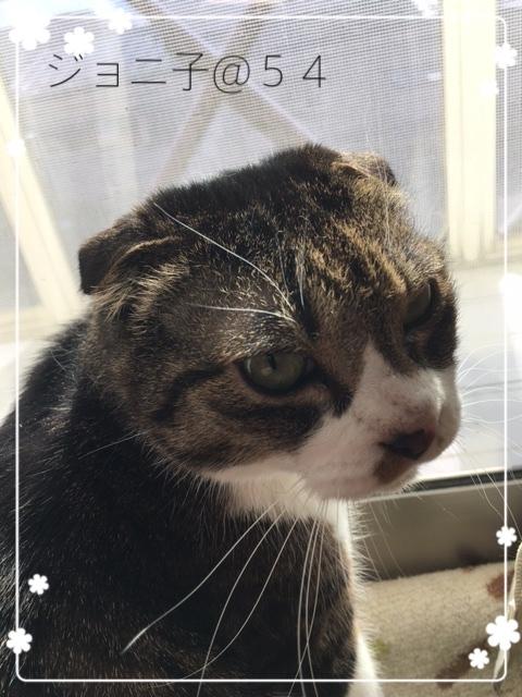 窓際のジョニ子さん2017-4