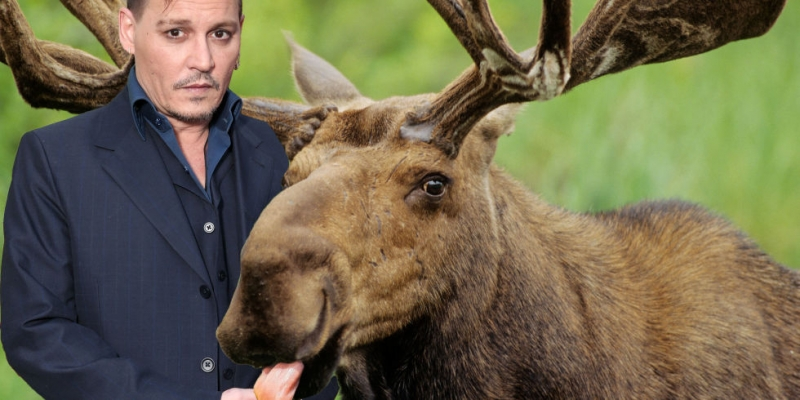 landscape-1487683018-johnny-depp-moose.jpg