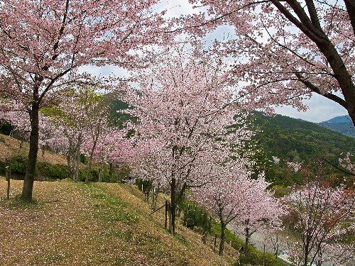 三井寺 (70)