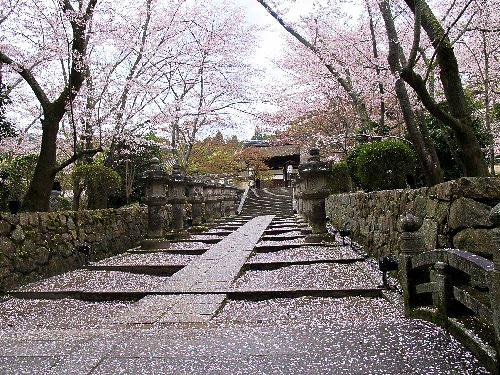 三井寺 (95)