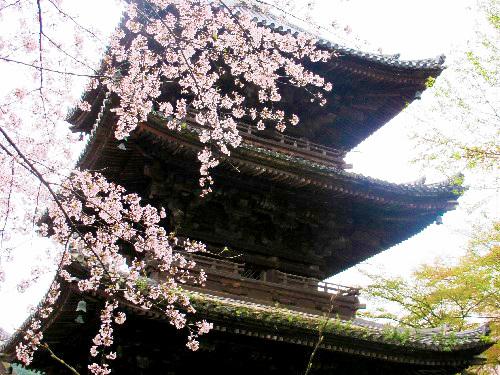 三井寺 (105)