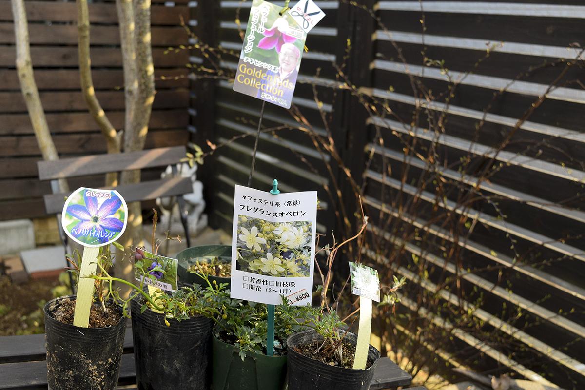 春の花々とクレマチス展で購入した苗