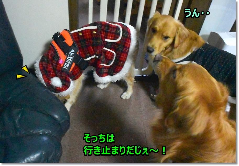 DSC_5459モっちゃん