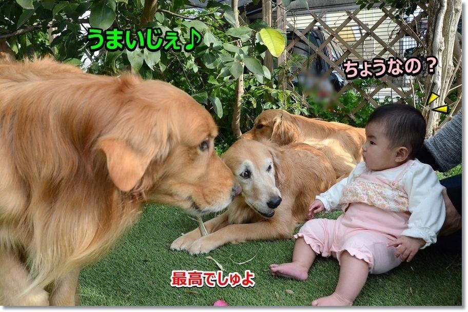 DSC_9122おいしじぇ~
