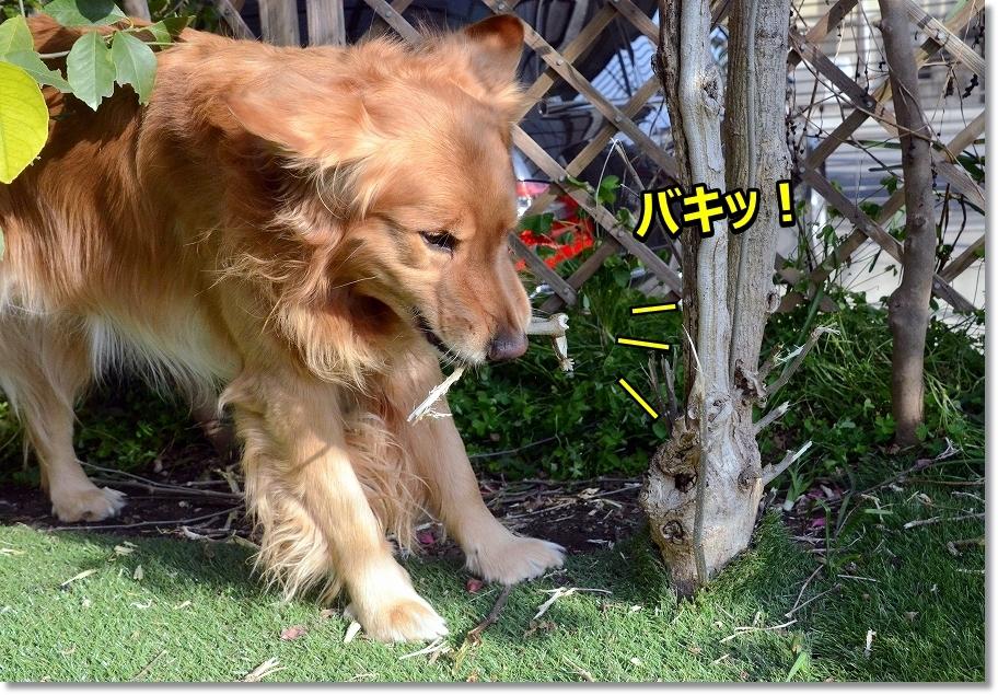 DSC_9552ばきっ!