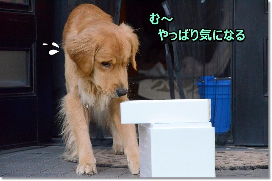 DSC_9555う・・うん
