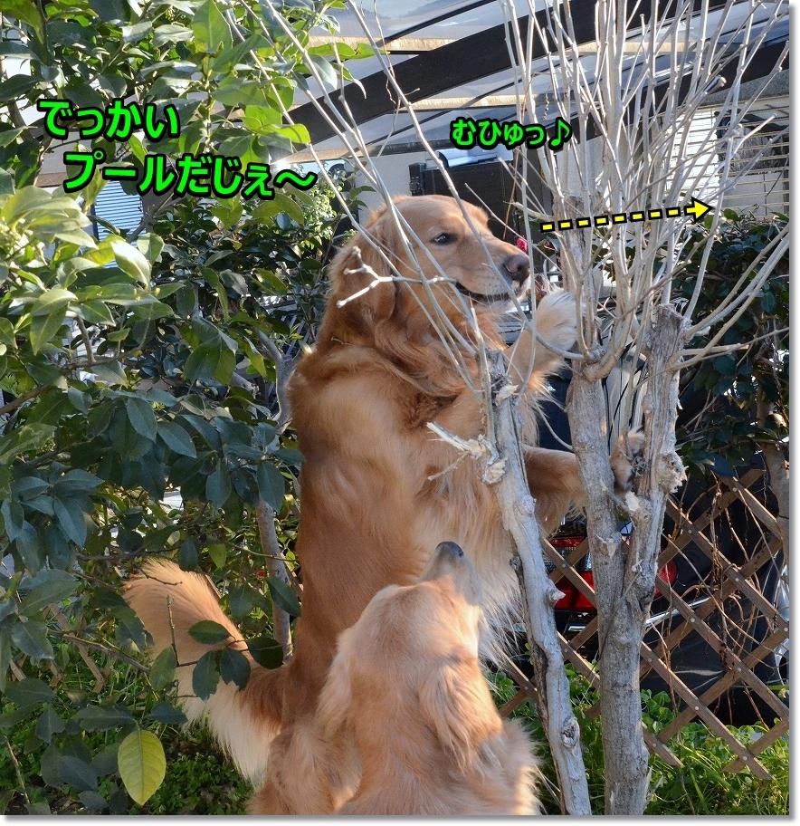 DSC_0513むひゅひゅ でっかいプール