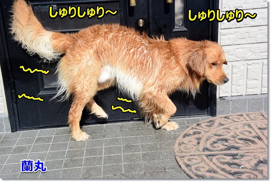 DSC_5217しゅりしゅり