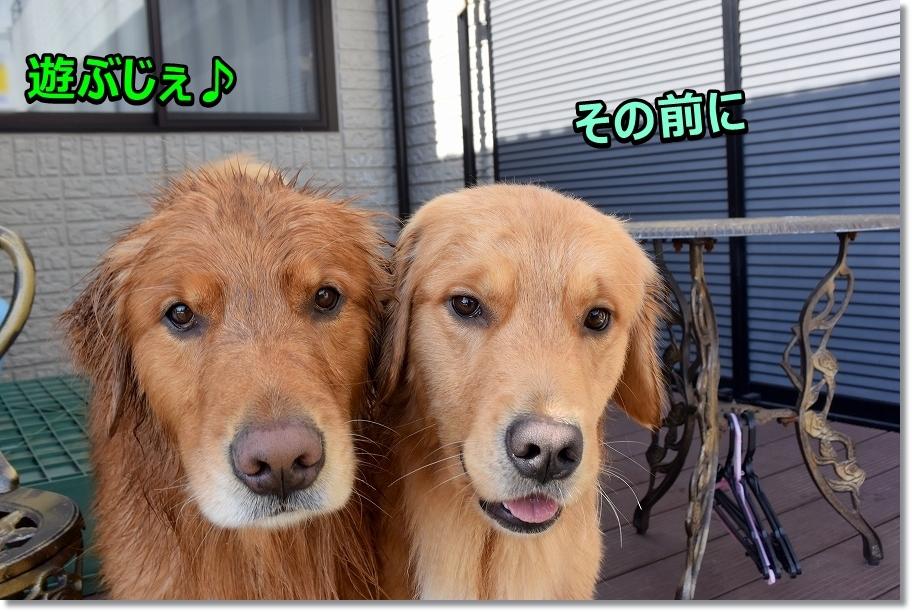 DSC_5228しょぶ?