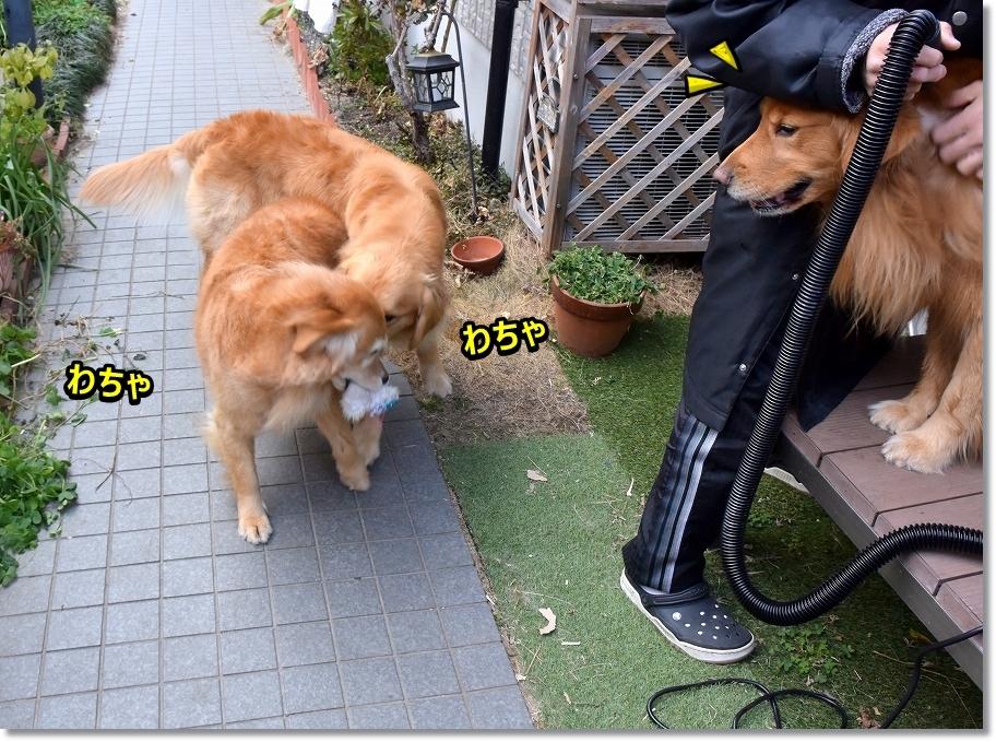 DSC_5315わちゃわちゃ