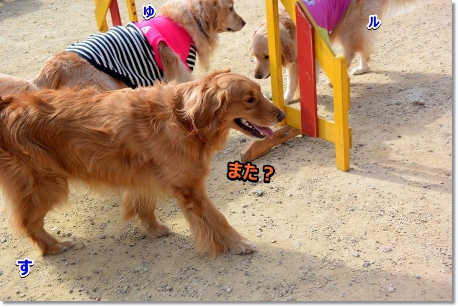DSC_5740サスケ~