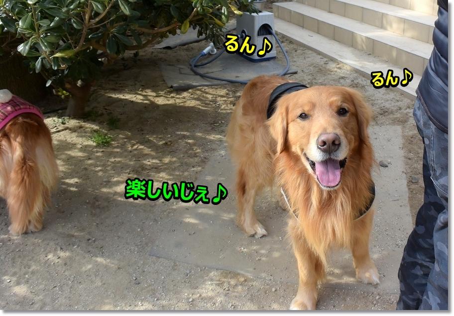 DSC_5745てへ♪