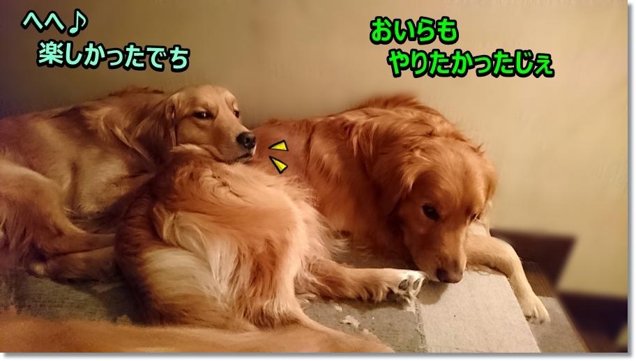 DSC_0047えへtanosikata