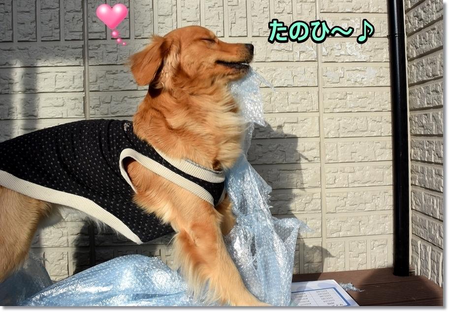 DSC_5983夢中