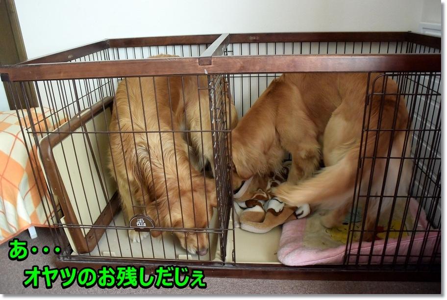 DSC_5714モっちゃんの寝床チェック