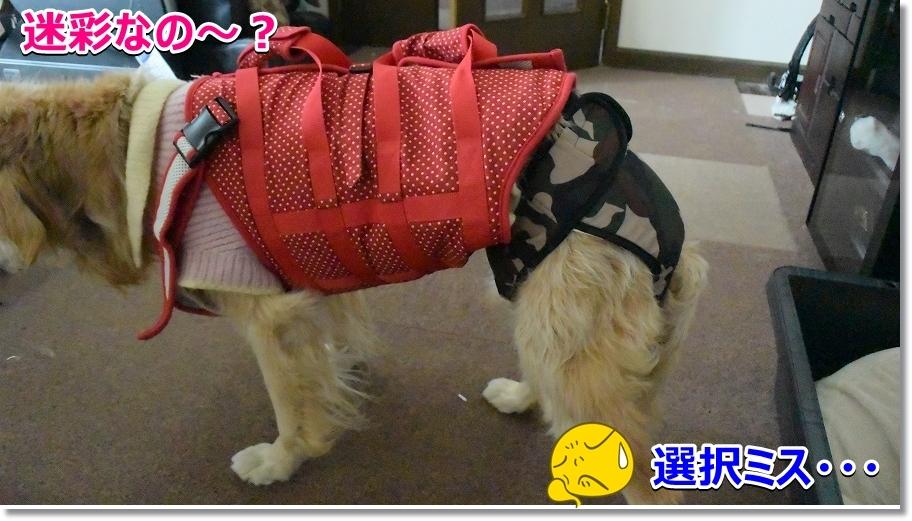 NMS_5629中型犬用