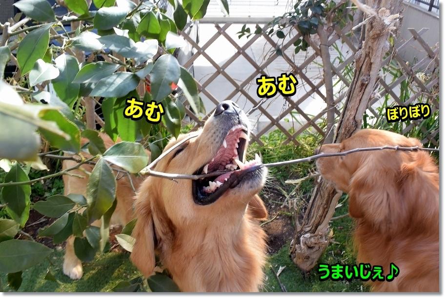 DSC_5619あ~ん