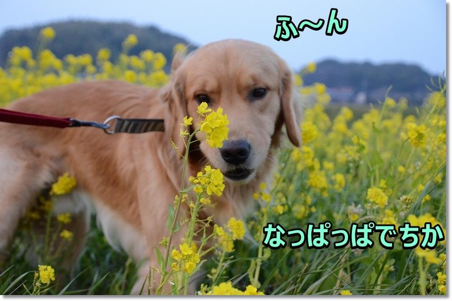 DSC_2174ほ~