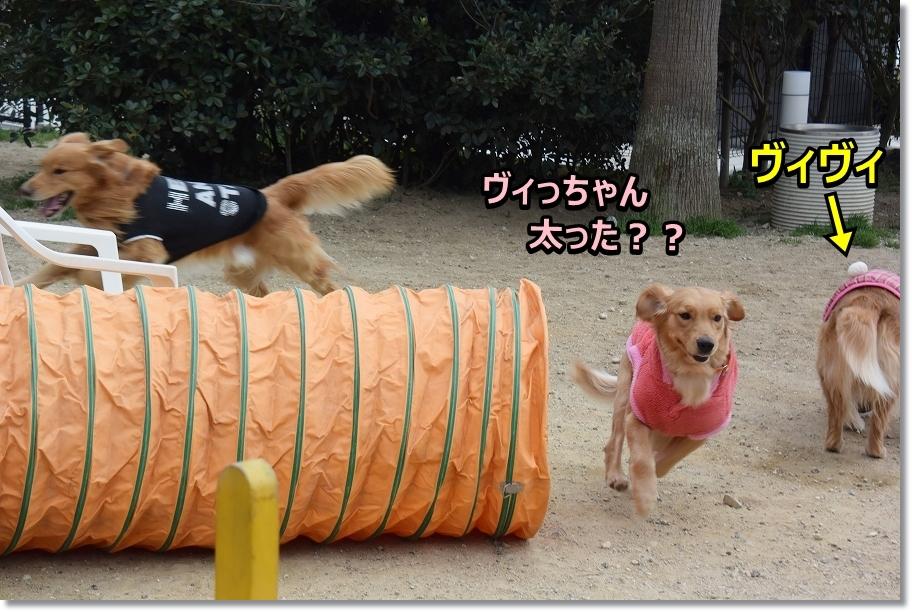 DSC_6057遊ぼうじぇ~ ヴィちゃん丸くない?