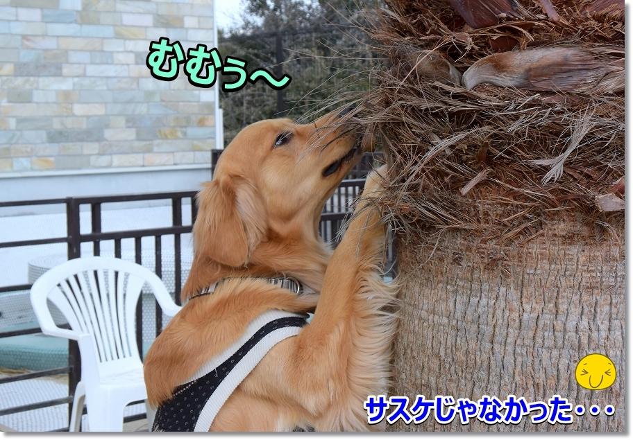DSC_6064む・む