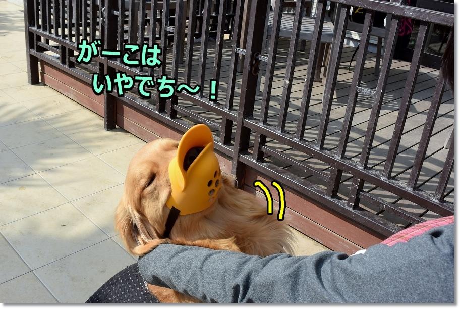 DSC_6120がーこはやでち~!