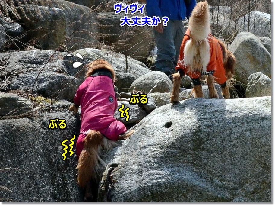 DSC_2534 ぷるぷる ファイト