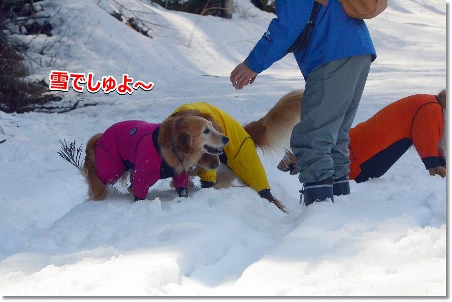 DSC_2638雪がいっぱいでしゅね~